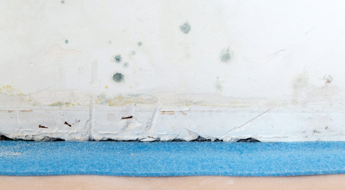Wand mit Schimmelbefall