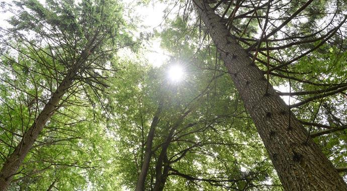 Deutsches Pelletinstitut: Wald