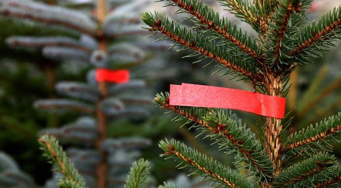 Natürlicher Weihnachtsbaum