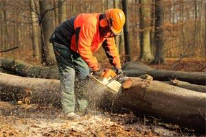 Brennholzeinschlag im Wald
