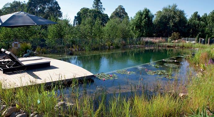 Naturpool Schwimmzone Regerationszone Sommerblumen