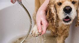 Symboldbild Hund in Badewanne