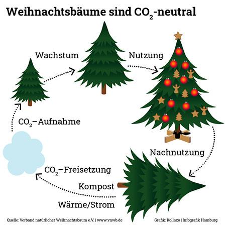 Klimagrafik naütliche Weihnachtsbäume