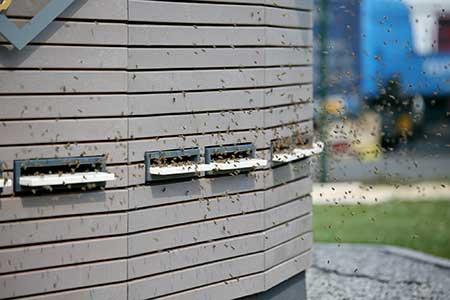 Bien-Zenker Bienen-Begegnungshaus Einflugschneise