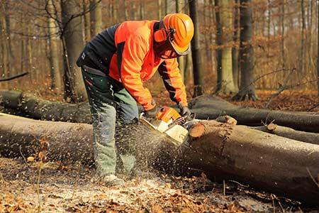 Waldarbeiter sägt Brennholz